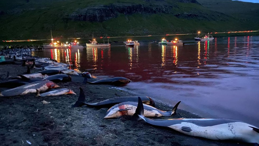 Record-breaking bloody hunt in Denmark's Faroe Islands slaughters almost 1,500 dolphins (GRAPHIC VIDEOS, PHOTOS)